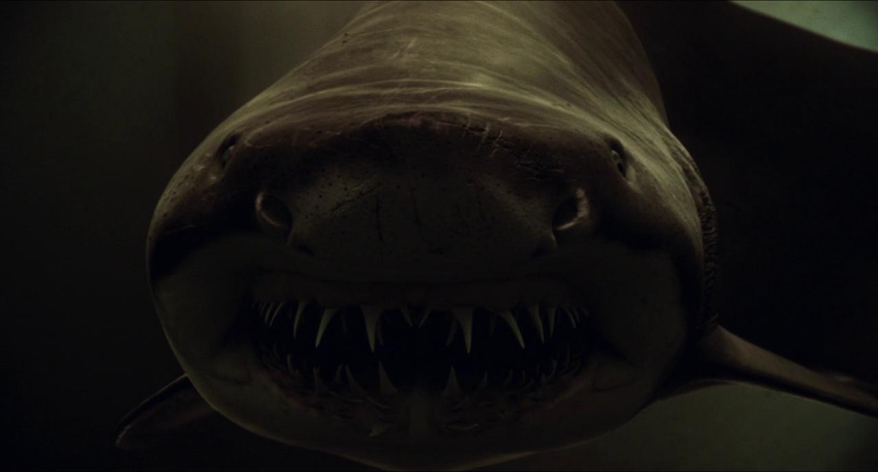 Watch Shark Night (2011) Full Movie Online - video dailymotion